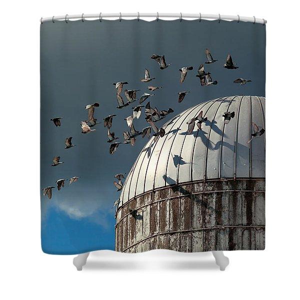 Bird - Birds Shower Curtain