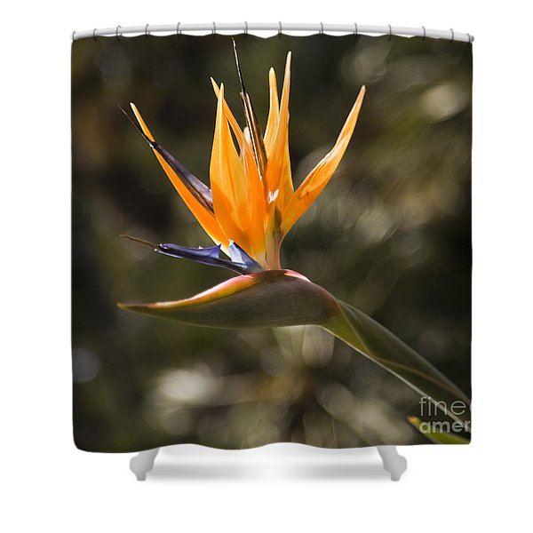 Shower Curtain featuring the photograph Bird Of Paradise by David Millenheft