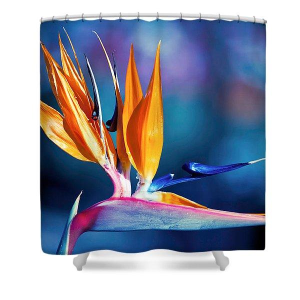 Shower Curtain featuring the photograph Bird Of Paradise by Gunter Nezhoda