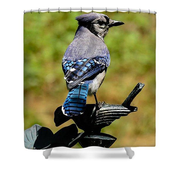 Bird On A Bird Shower Curtain