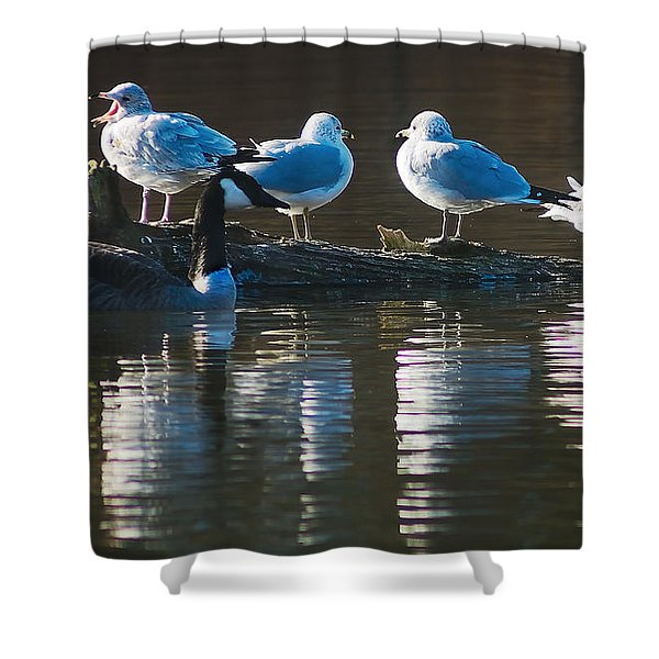 Birds On A Log Shower Curtain