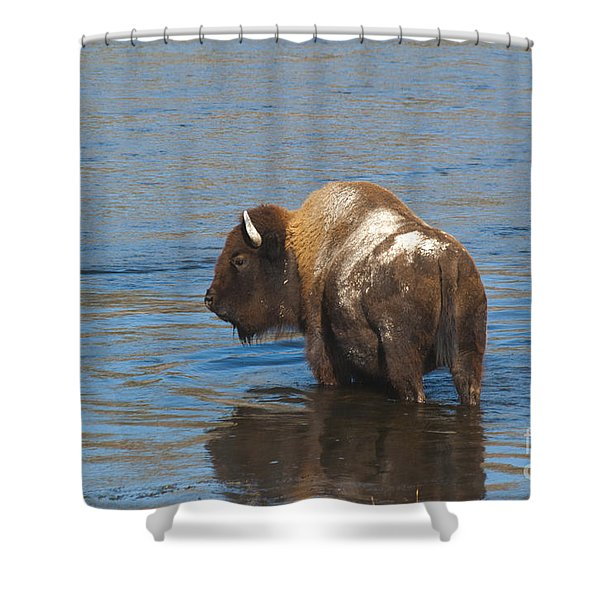 Bison Crossing River Shower Curtain