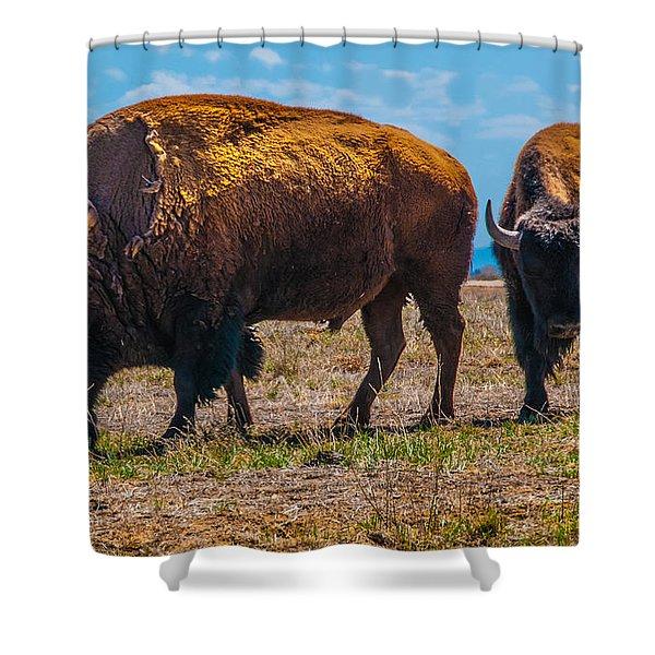 Bison Pair_1 Shower Curtain