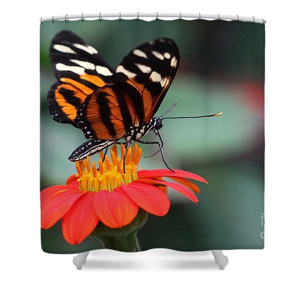 Black And Brown Butterfly On A Red Flower Shower Curtain