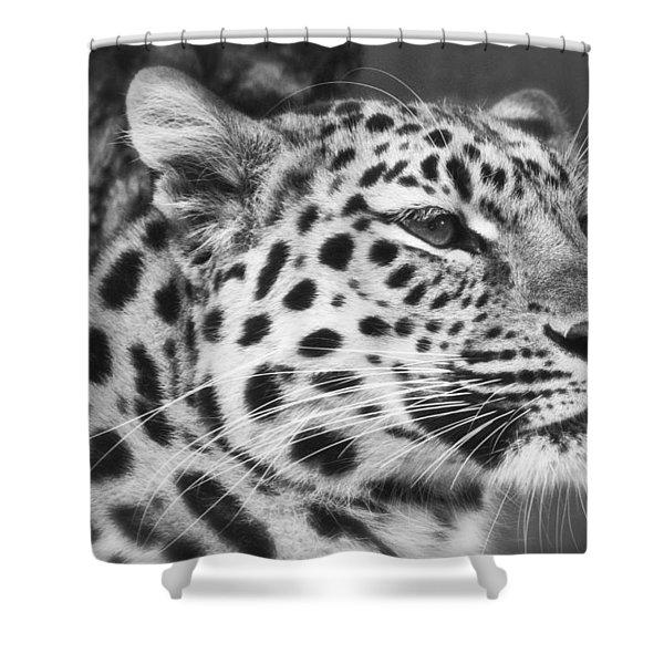 Black And White - Amur Leopard Portrait Shower Curtain
