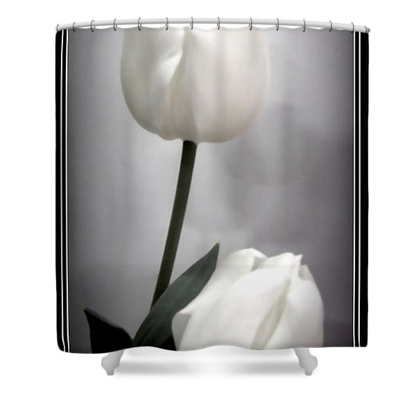 Black And White Tulips  Shower Curtain