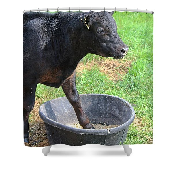 Black Angus Calf Shower Curtain