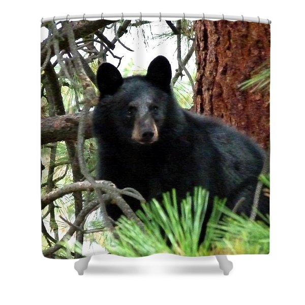 Black Bear 1 Shower Curtain