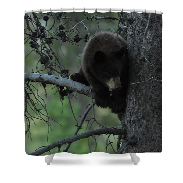 Black Bear Cub In Tree Shower Curtain