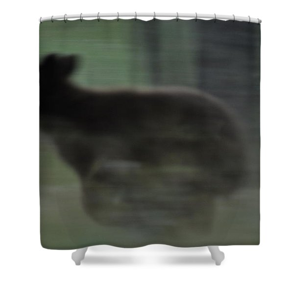 Black Bear Cub Running Shower Curtain