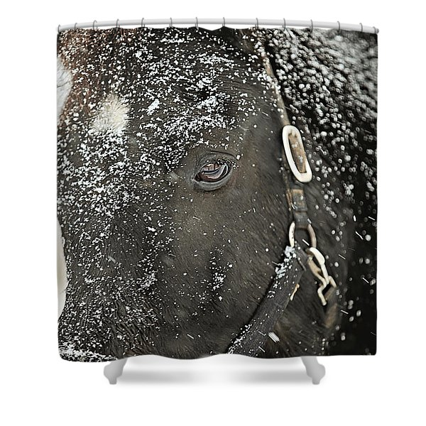 Black Beauty In A Blizzard Shower Curtain