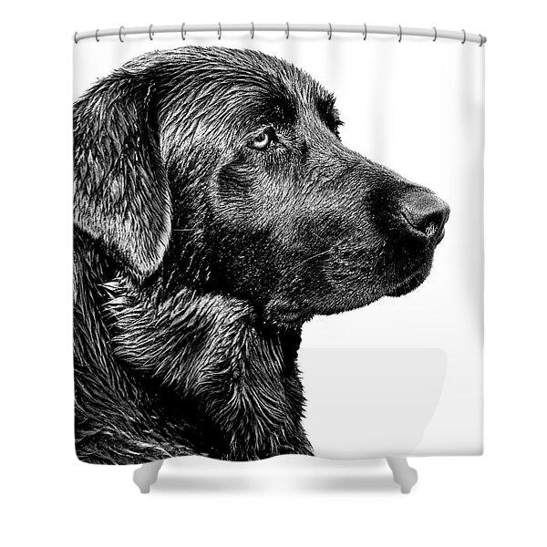 Black Labrador Retriever Dog Monochrome Shower Curtain