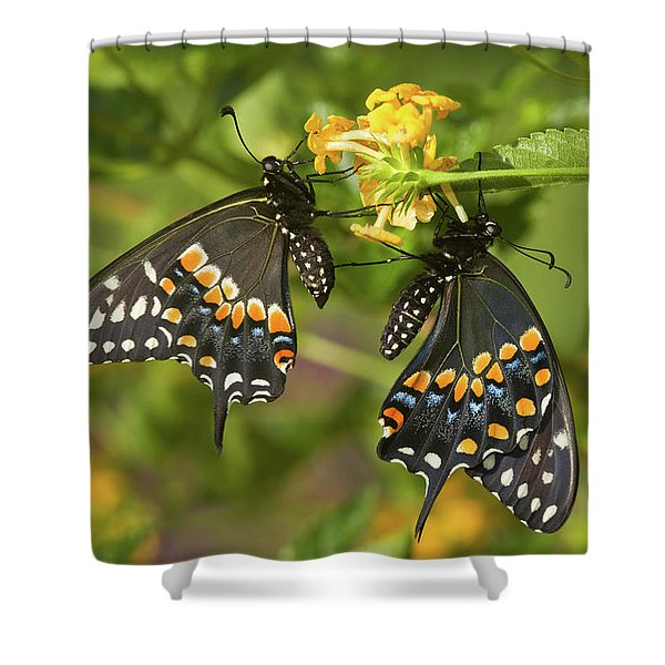 Black Swallowtail Butterflies Papilio Shower Curtain