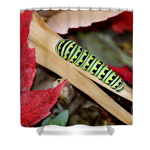 Black Swallowtail Butterfly Caterpillar Shower Curtain