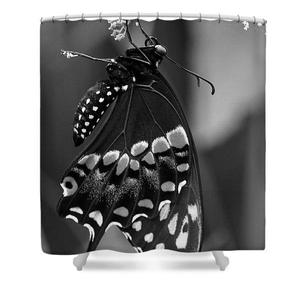 Black Swollowtail  Shower Curtain