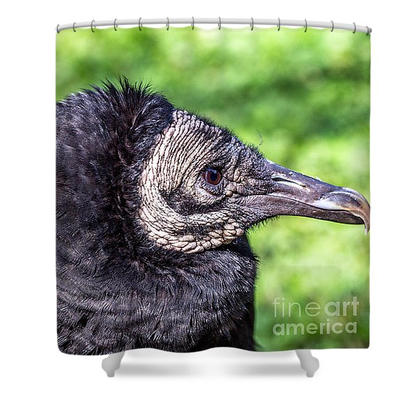 Black Vulture Waiting For Prey Shower Curtain