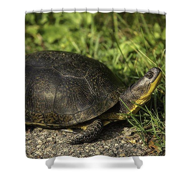Blanding's Turtle Shower Curtain