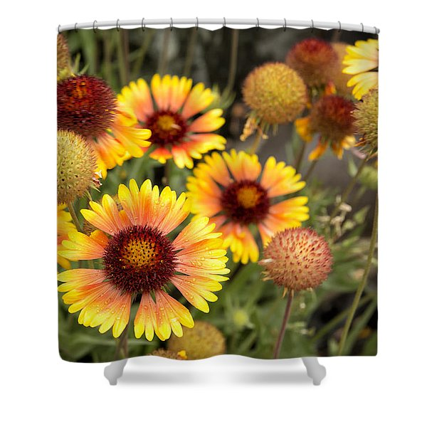Blanket Flowers  Shower Curtain