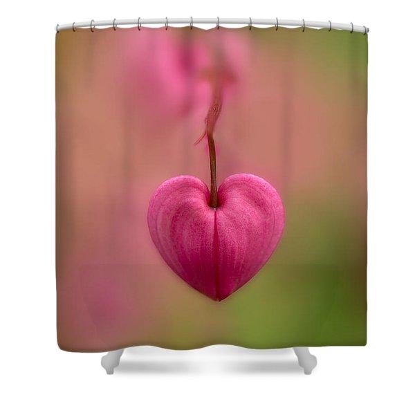 Shower Curtain featuring the photograph Bleeding Heart Flower by Jaroslaw Blaminsky