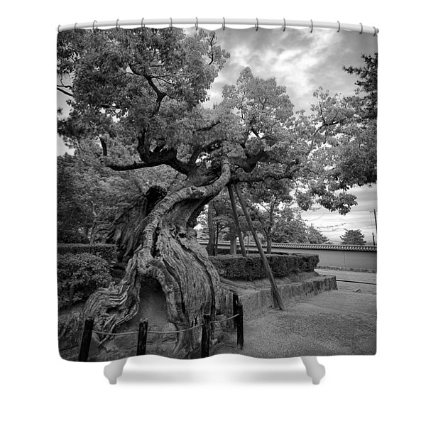Blessed Tree Of Horyuji Temple - Japan Shower Curtain