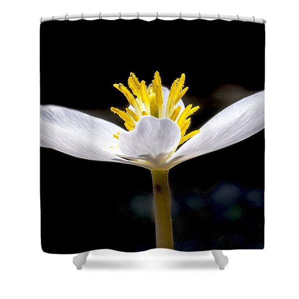 Bloodroot 1 Shower Curtain