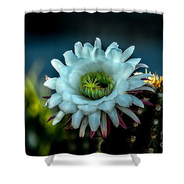 Blooming Argentine Giant Shower Curtain