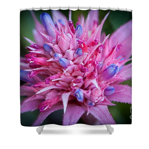 Shower Curtain featuring the photograph Blooming Bromeliad by John Wadleigh