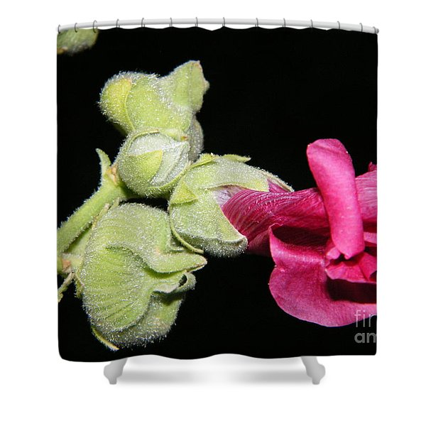 Blooming Pink Hollyhock Shower Curtain