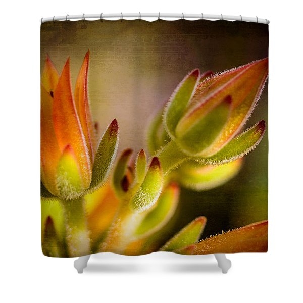 Blooming Succulents Iv Shower Curtain