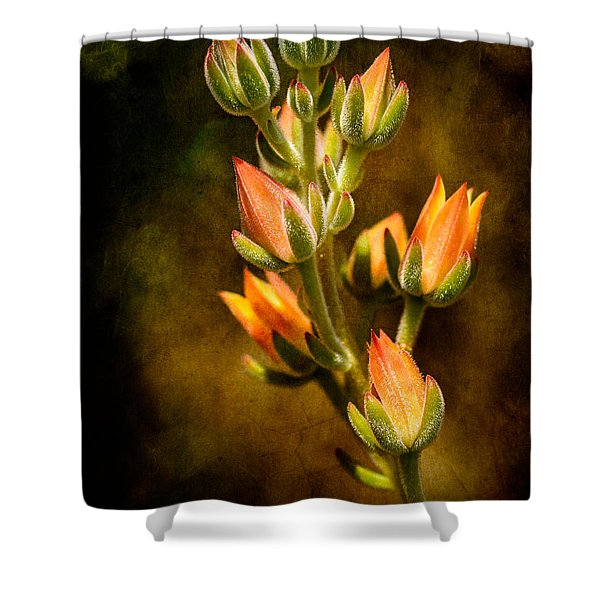 Blooming Succulents Vi Shower Curtain