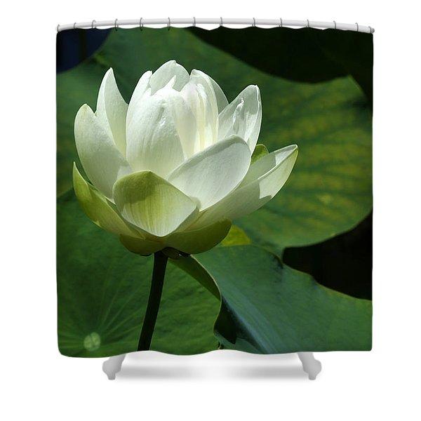 Blooming White Lotus Shower Curtain
