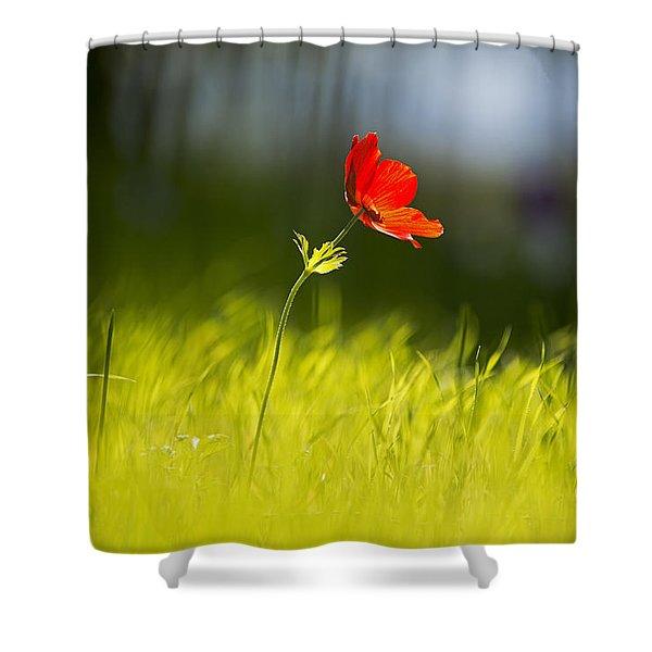 Blossomed Megiddo 1 Shower Curtain