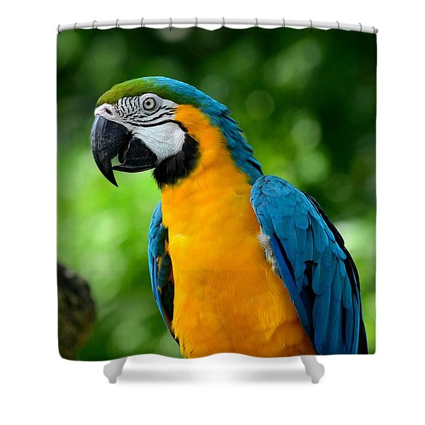 Blue And Yellow Gold Macaw Parrot Shower Curtain
