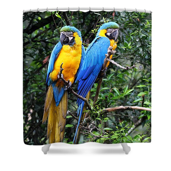 Blue And Yellow Macaws Shower Curtain