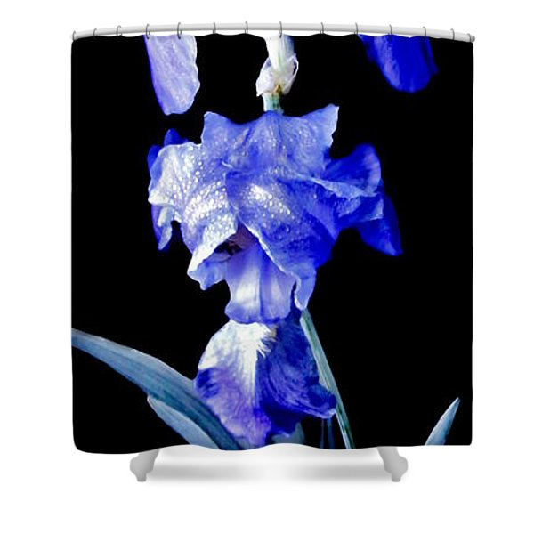 Blue Bearded Rhizomatous Irises Shower Curtain