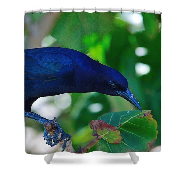 Blue-black Black Bird Shower Curtain
