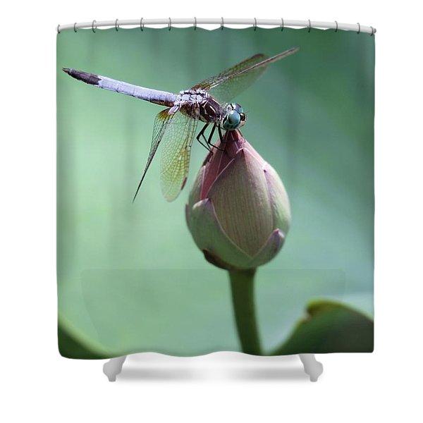 Blue Dragonflies Love Lotus Buds Shower Curtain