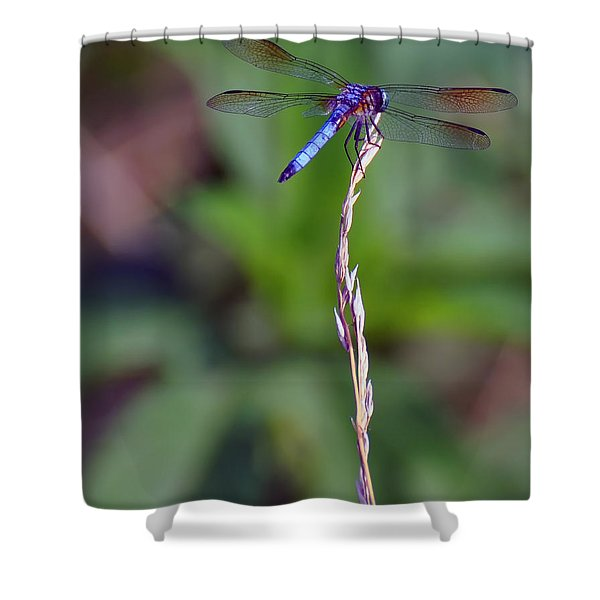 Blue Dragonfly On A Blade Of Grass  Shower Curtain