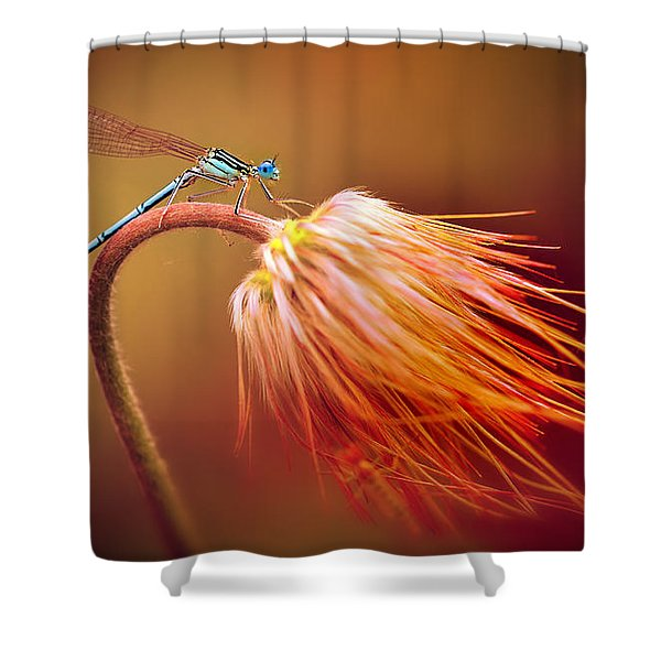 Shower Curtain featuring the photograph Blue Dragonfly On A Dry Flower by Jaroslaw Blaminsky