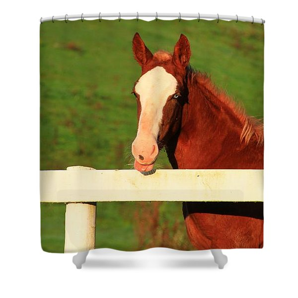 Blue Eyed Horse Shower Curtain