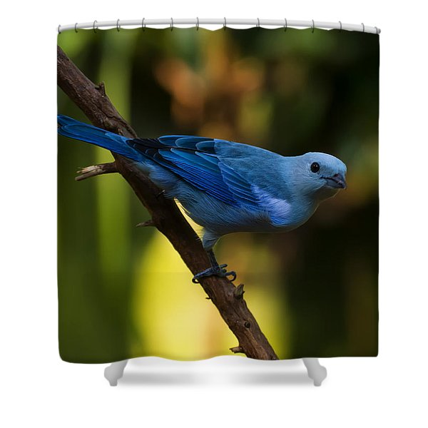 Blue Grey Tanager Shower Curtain