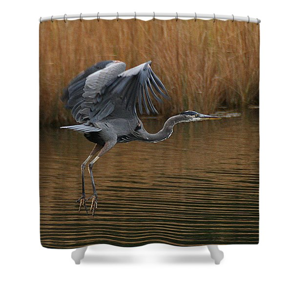 Shower Curtain featuring the photograph Blue Heron Takes Flight by William Selander
