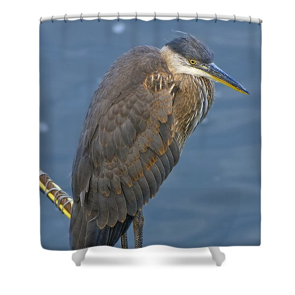 Blue Herron Shower Curtain