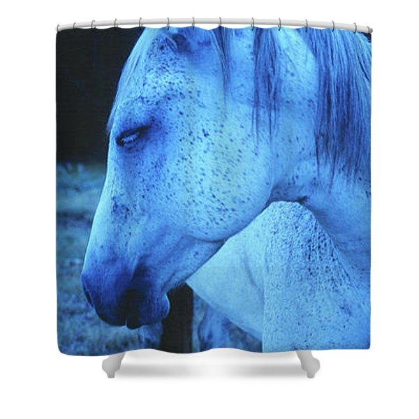 Blue Horse In Field Shower Curtain