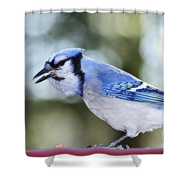 Blue Jay Bird Shower Curtain