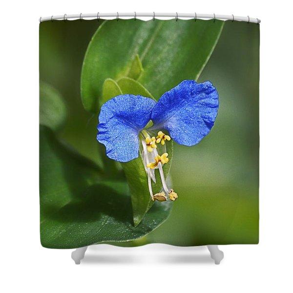 Blue Mouse Ears Shower Curtain