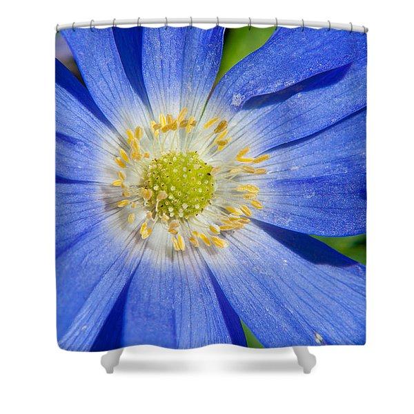 Blue Swan River Daisy Shower Curtain