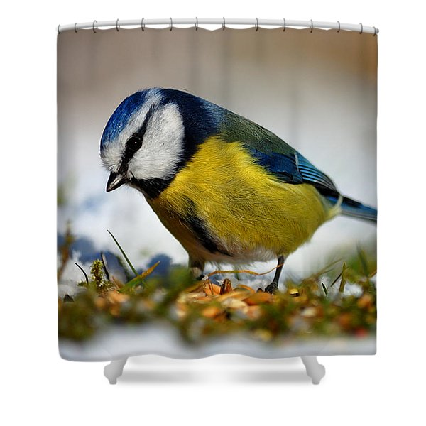 Blue Tit Shower Curtain