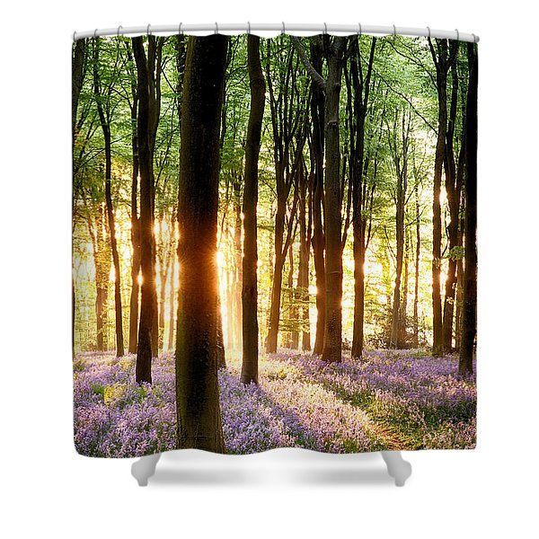 Bluebells In Sunrise Light Shower Curtain