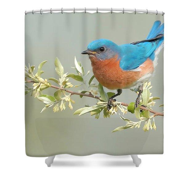 Bluebird Floral Shower Curtain